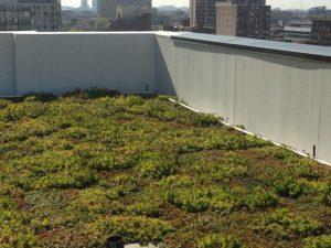 Rooftop Garden Design Chicago IL