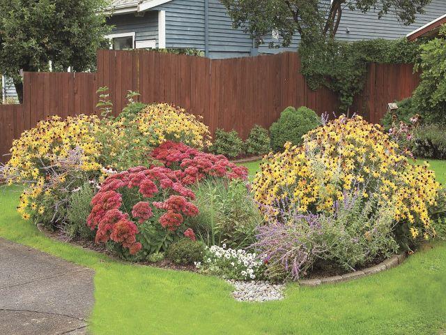 picture of rain garden